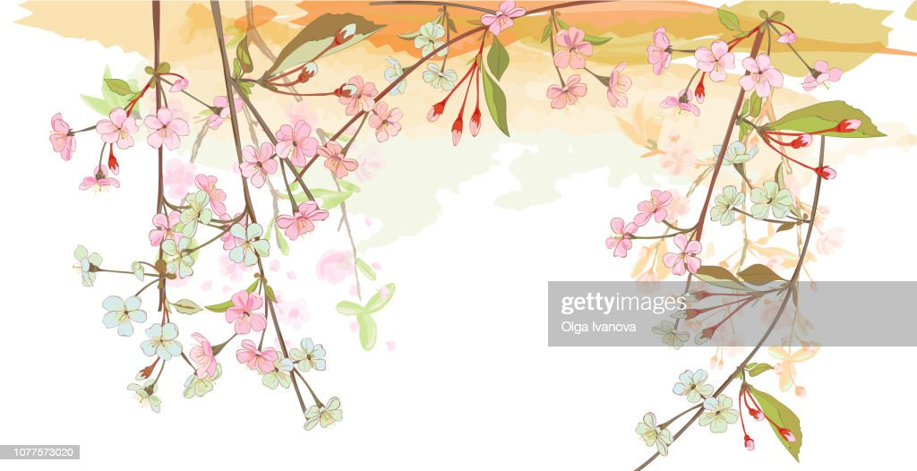 Panoramic view, horizontal border with spring blossom. Pink, bluish flowers: cherry, (sakura, almond, plum). Branches hang down from above, white background. Digital drawing, watercolor style, vector