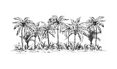 panoramic view of the forest from palm trees