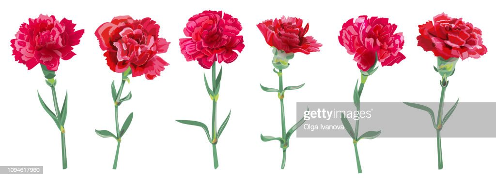 Panoramic view with carnation schabaud. Set red flowers, green stems, leaves on white background, collection for Mother's Day, Victory Day, digital draw, vintage illustration, vector, watercolor style