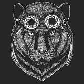 Panther Puma Cougar Wild cat Hand drawn image for tattoo, emblem, badge, logo, patch, t-shirt Cool animal wearing aviator, motorcycle, biker helmet.