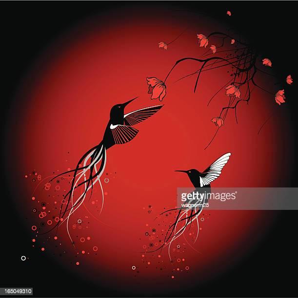 パラダイスラグーン Hummingbirds