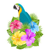 Parrot Ara, Colorful Hibiscus Flowers Blossom and Tropical Leaves