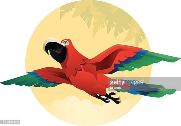 Perroquet volant