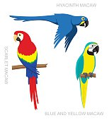 Parrot Macaw Cartoon Vector Illustration
