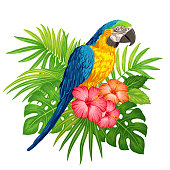 Parrot macaw with tropical plants