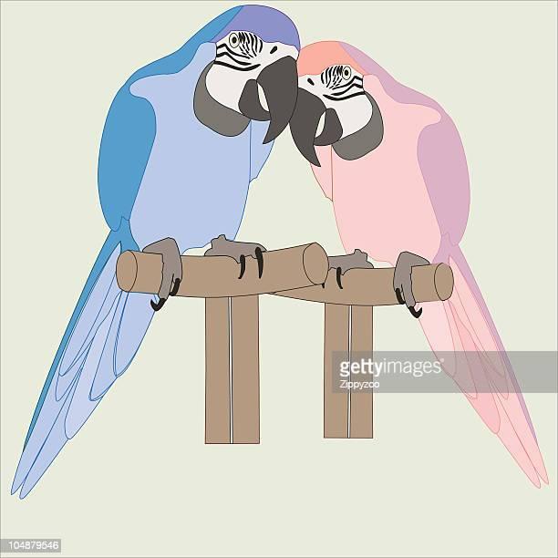Parrot paire (aras) (vecteur
