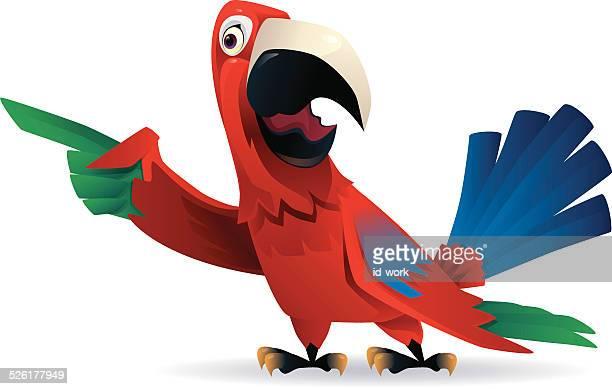 parrot pointant du doigt