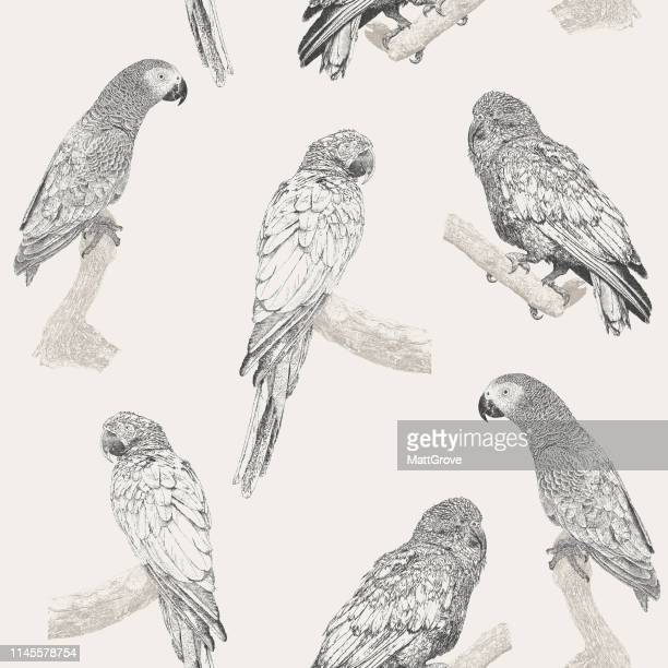 parrot seamless repeat pattern - parrot stock illustrations, clip art, cartoons, & icons