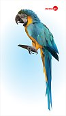 Parrot sitting on a wooden branch, Brazilian Ara.