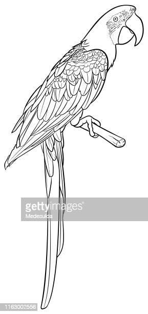 illustrations, cliparts, dessins animés et icônes de parrot vector line art (en) - perroquet