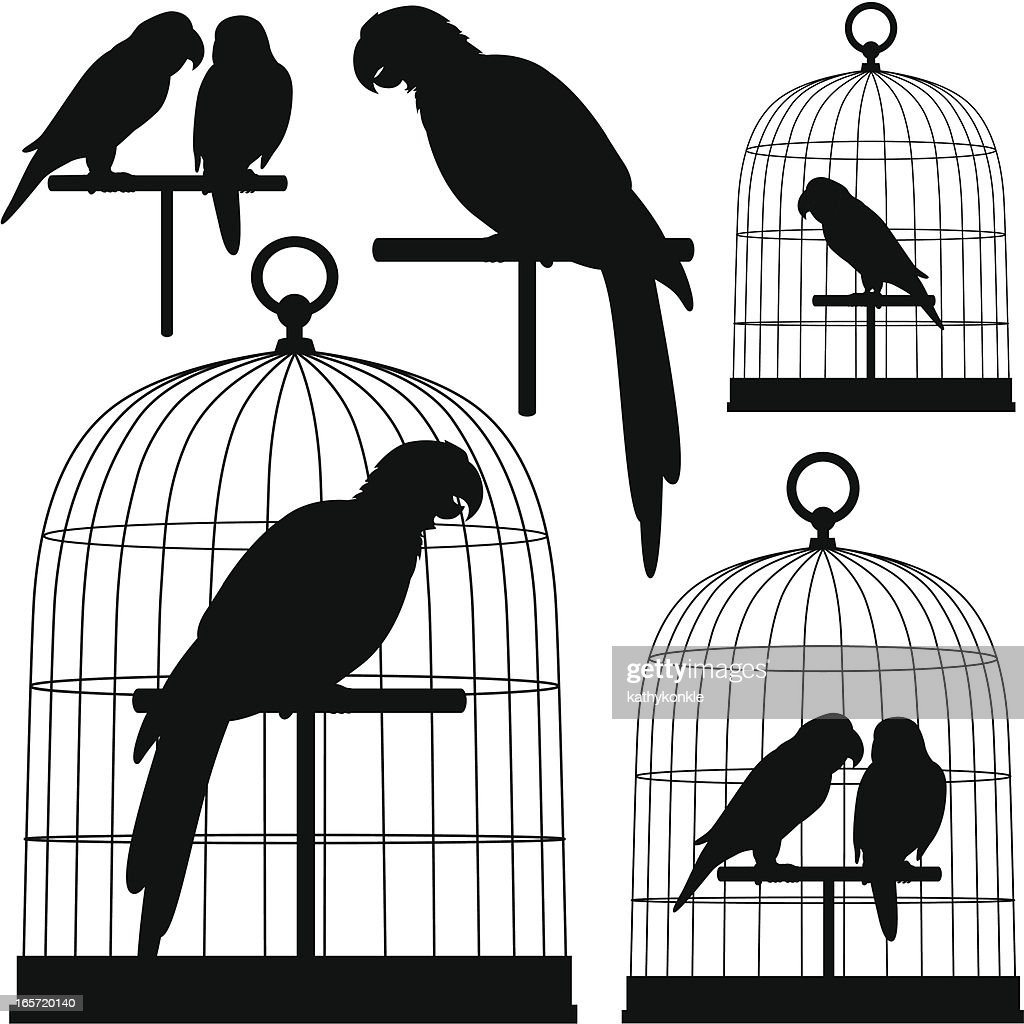 parrots in silhouette : stock illustration
