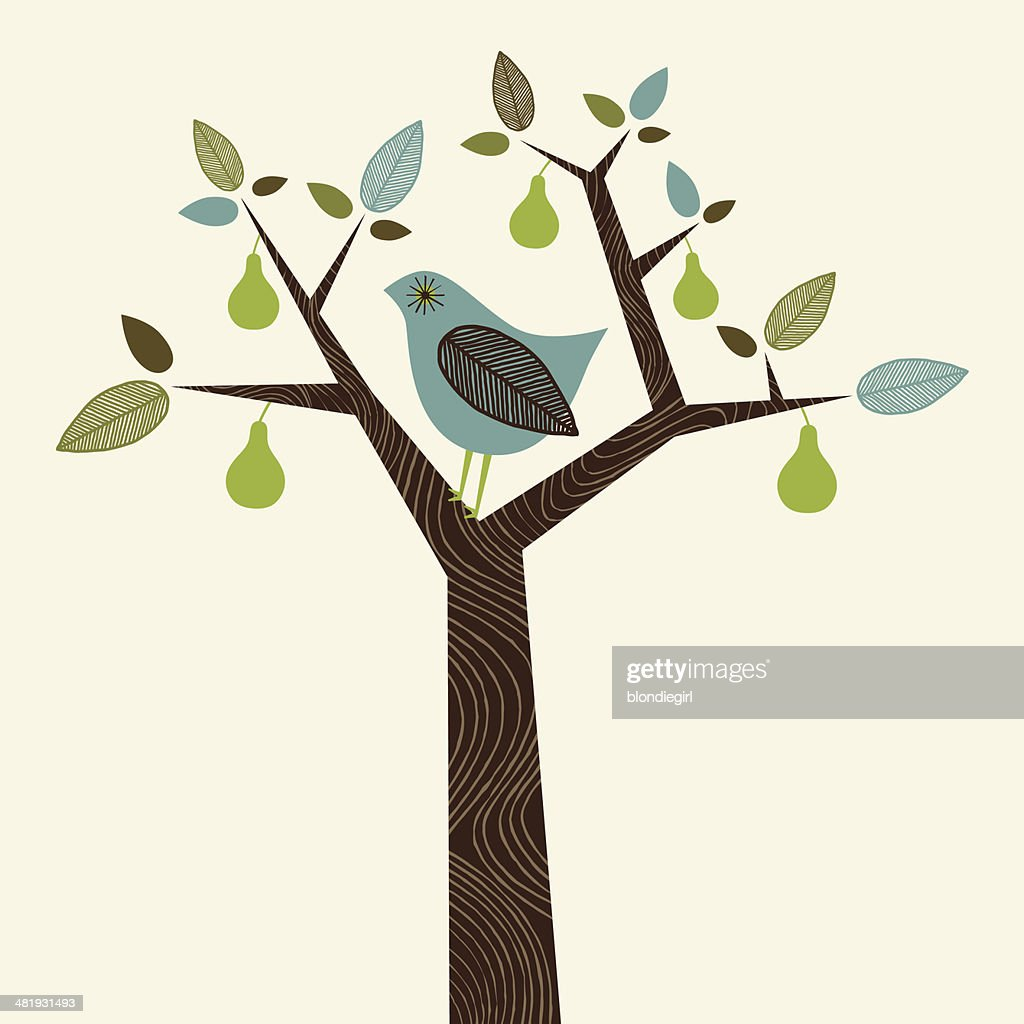 Partridge in a Pear Tree : stock illustration