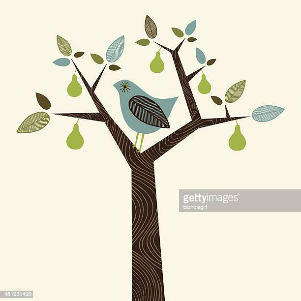 partridge in a pear tree - tree trunk stock illustrations, clip art, cartoons, & icons