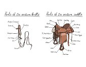 Parts of western saddle and bridle with text letters description. Horse tack.