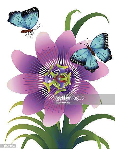 passionflower and morpho butterflies