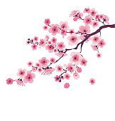 pastel color cherry blossom. vector illustration.  japan sakura branch with blooming flowers