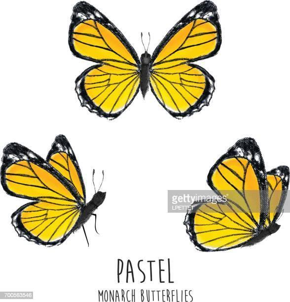 Pastel Monarch Butterflies
