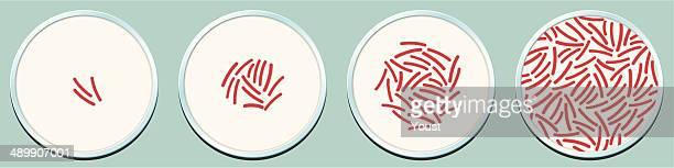 Les crustacés peuvent renfermer une croissance des bactéries