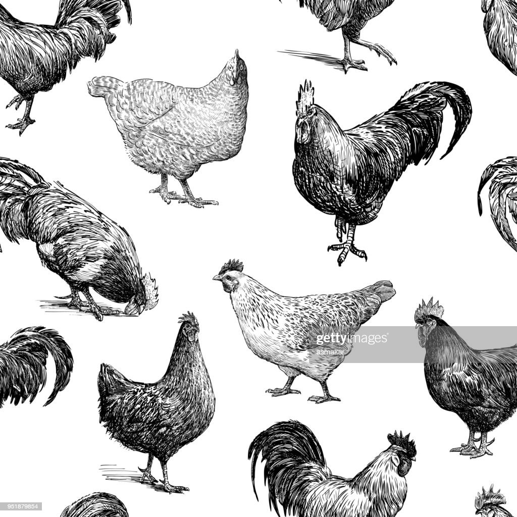 Pattern of the cocks and hens sketches