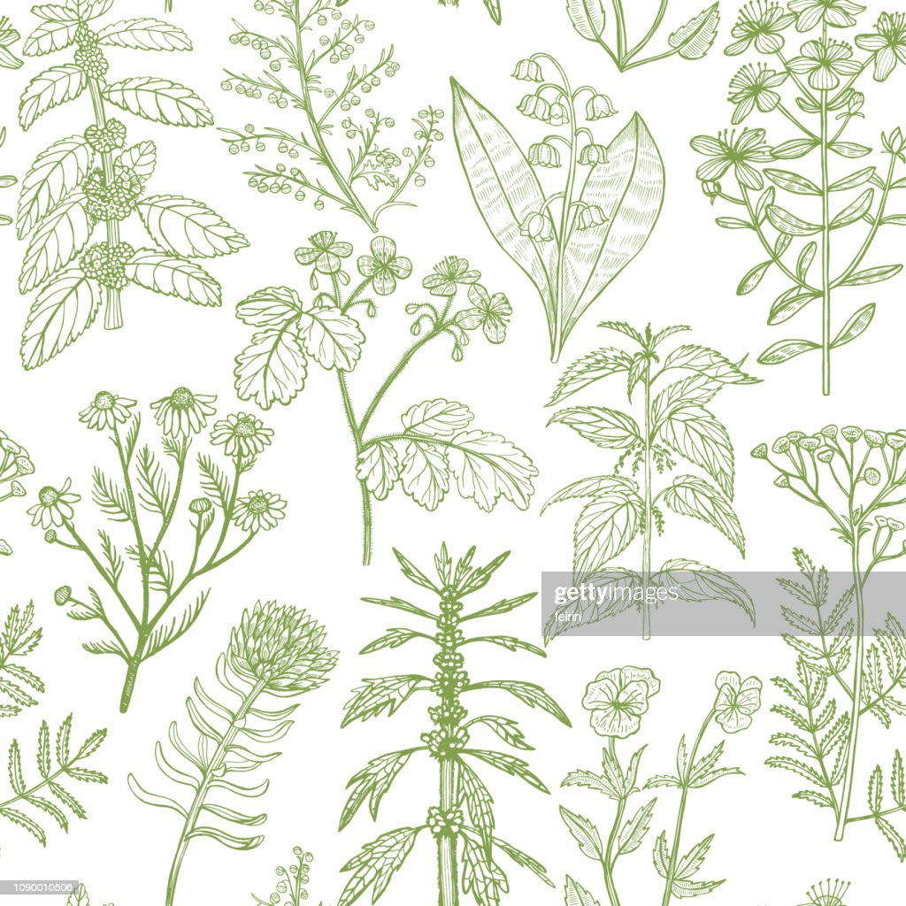 Pattern with Medicinal Plants in Hand-Drawn Style