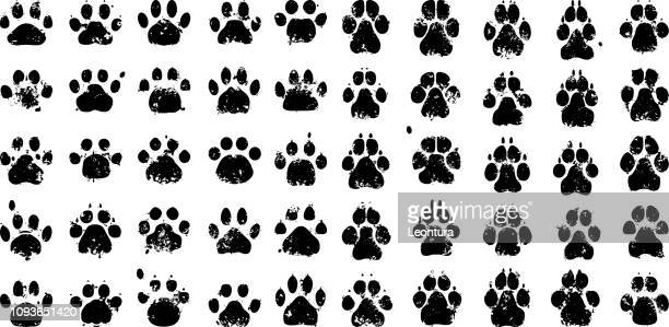 paw prints - dog stock illustrations