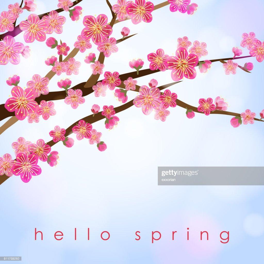Peach Blossom in Spring