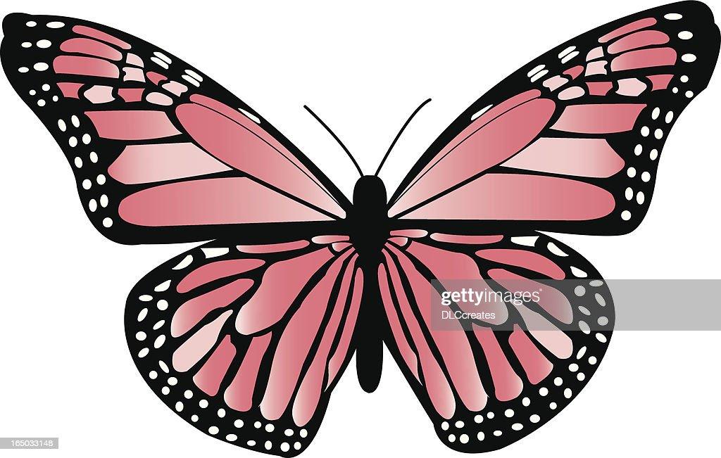 Peach Monarch Butterfly