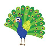 Peacock animal cartoon character vector illustration.