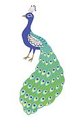 Peacock bird blue green yellow isolated illustration vector