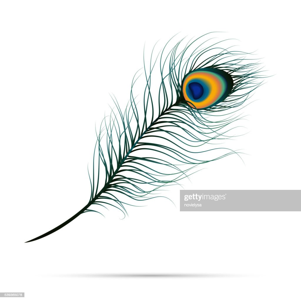 Peacock feather on isolated background