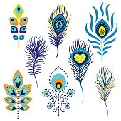 Peacock feathers vector illustration clipart.