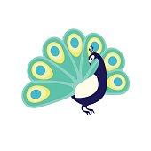 Peacock. Flat vector illustration