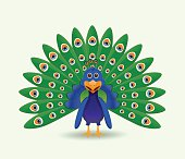 peacock illustration isolated
