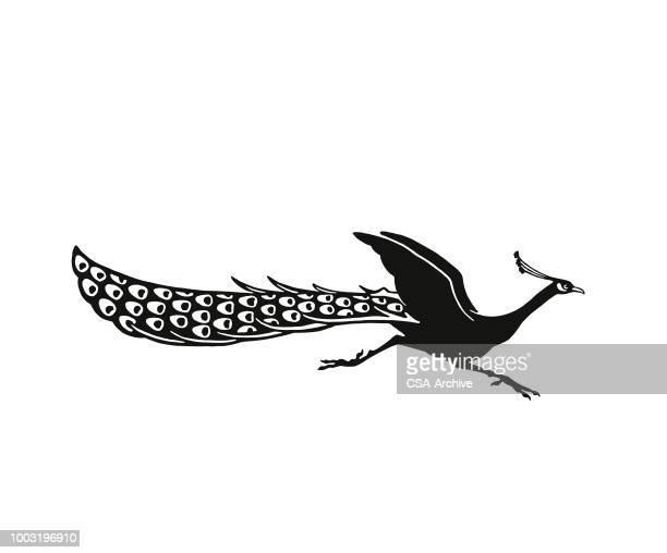 ilustrações, clipart, desenhos animados e ícones de pavão corrida - peahen
