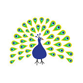 Peacock with open tail. Feather out. Beautiful Zoo animal collection. Exotic tropical bird. Cute cartoon character. Decoration element. Flat design. White background. Isolated