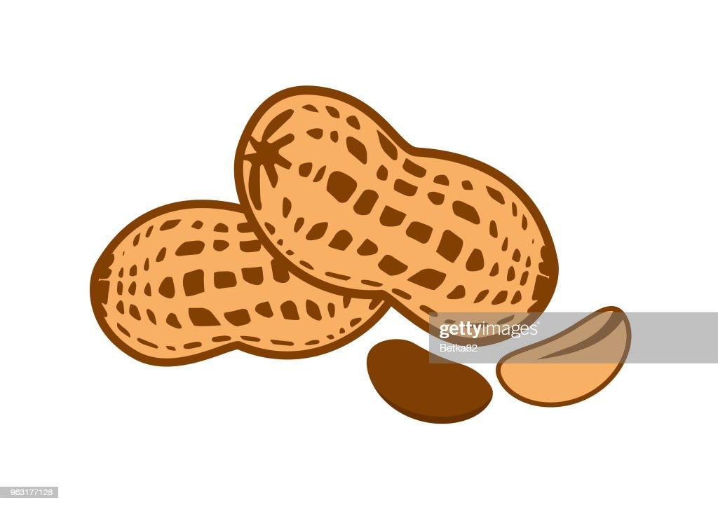 Peanut vector illustration