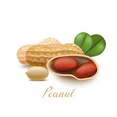 Peanut with Leaves in Realistic Style
