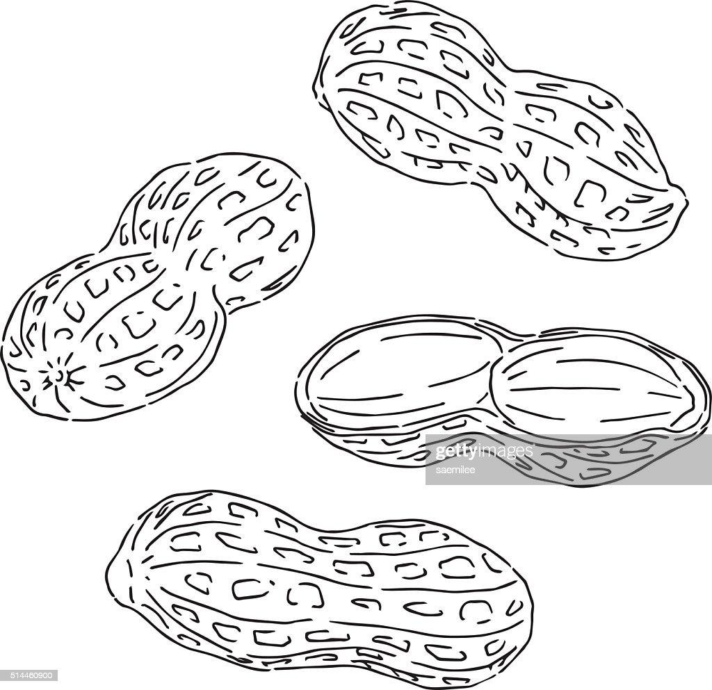 60 Top Peanut Food Stock Illustrations, Clip art, Cartoons