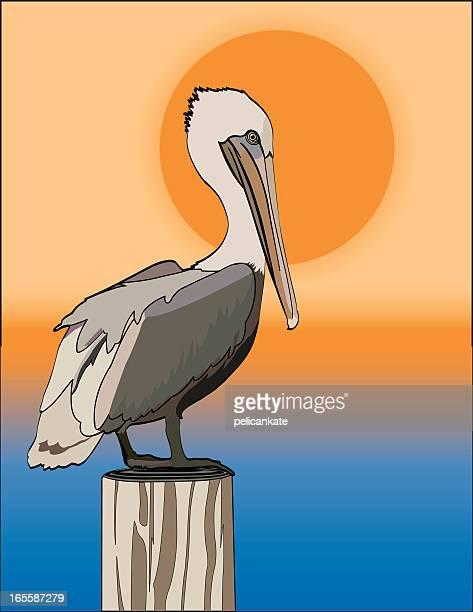 Pelican in the Setting Sun