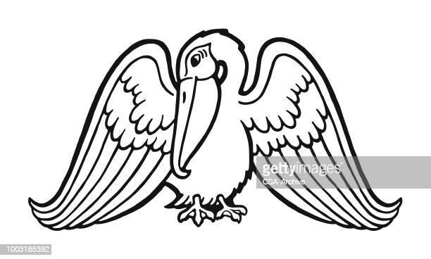 pelican - pelican stock illustrations