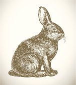 Pen and ink sketch of rabbit on white background