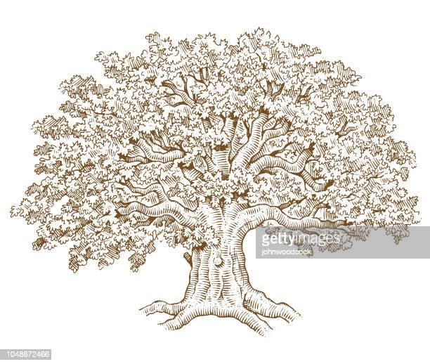 pen and ink tree illustration - woodcut stock illustrations