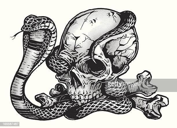 ilustraciones, imágenes clip art, dibujos animados e iconos de stock de pluma tinta & cráneo con cobra serpiente - cobra