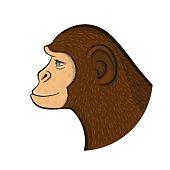 Pencil drawing monkey,vector illustration