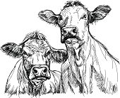 A pencil sketch of two cows facing viewer