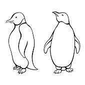 Penguin black white isolated graphic bird isolated illustration vector