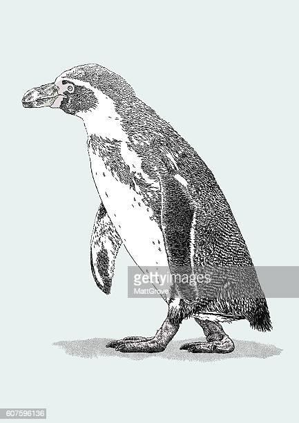 penguin - antarctica stock illustrations, clip art, cartoons, & icons
