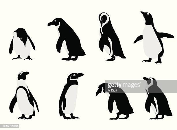 Penguins Vector Silhouette