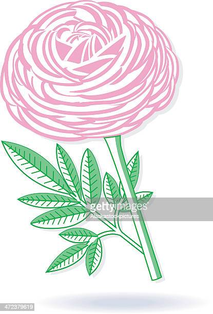 peony (graphically variant). - ranunculus stock illustrations, clip art, cartoons, & icons