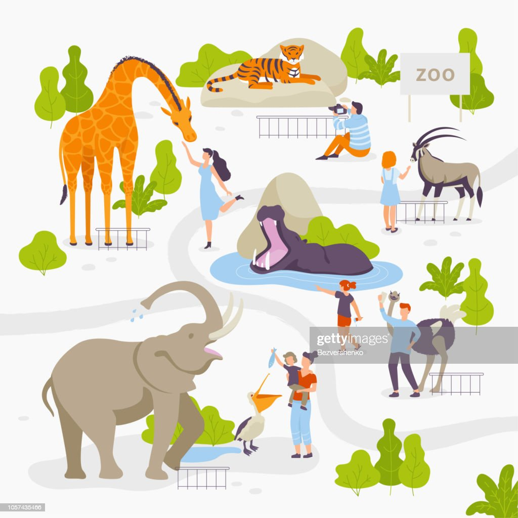 People love and look at wild animals in the zoo set of vector illustrations in flat design isolated on white background. Men, women, family, children at the zoo park having fun.